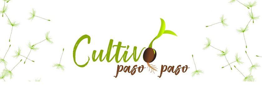 CULTIVO PASO A PASO